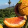 Arance Moro di Sicilia