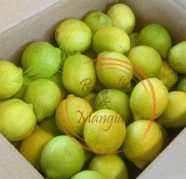 Confezione Limoni 17 kg