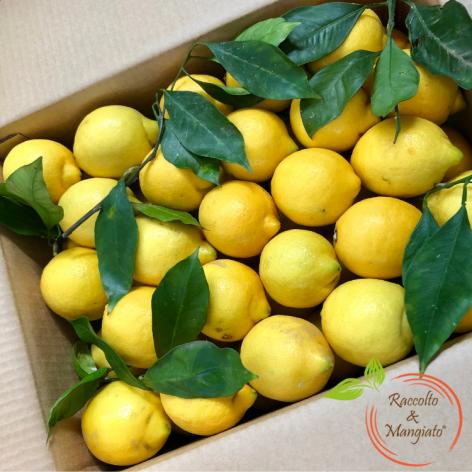 Confezione limoni