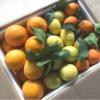 Confezione agrumi 15 kg