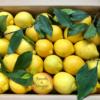 Limoni siciliani in confezione