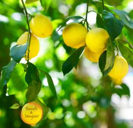 Pianta di limoni siciliani