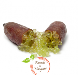 Finger Lime Siciliano