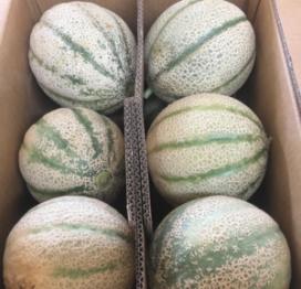 Confezione da 12 Meloni